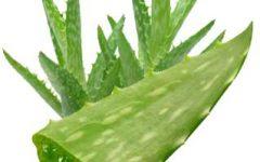 Os Benefícios do Aloe Vera