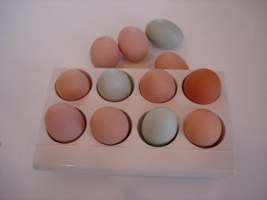 egg-protein-for-weight-loss