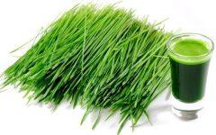 Os Benefícios do suco da grama da cevada para saúde