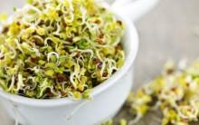 Os Benefícios dos brotos de ervilha para Saúde