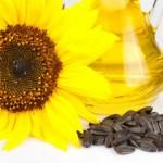 semente-de-girassol-emagrece-620x415