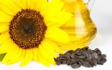 Os Benefícios das sementes de girassol para a saúde