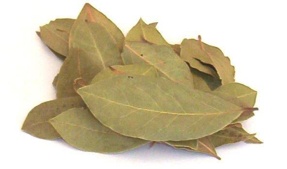 Os Benefícios da folha de louro para saúde