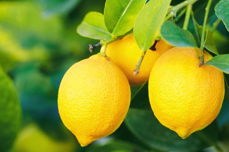 Os 18 Benefícios do Limão Para Nossa Saúde