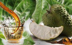 Os 8 Benefícios do Chá de Graviola Para Tua Saúde
