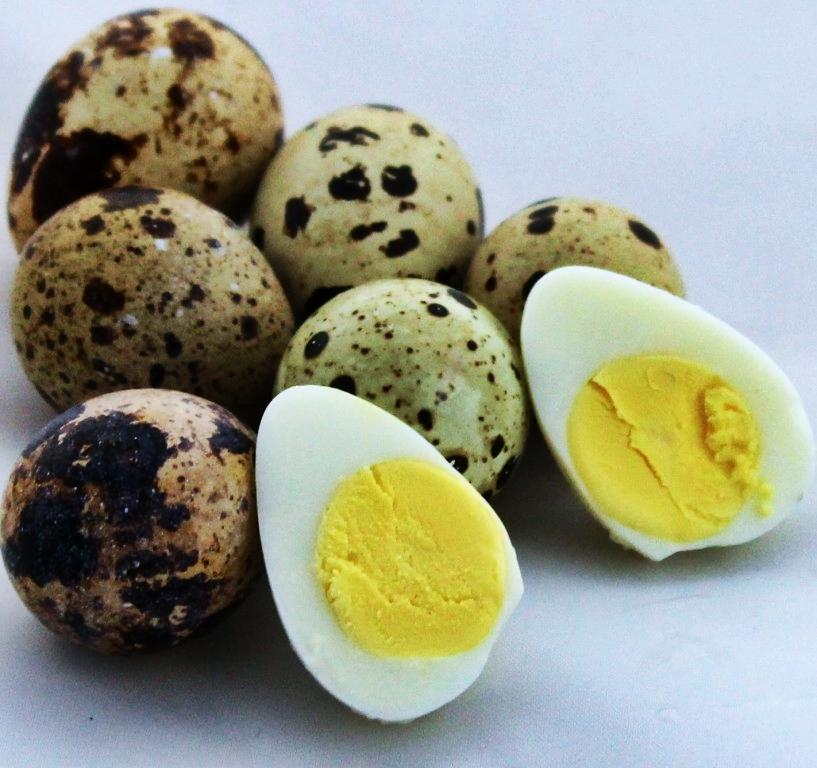 Os 11 Benefícios do Ovo de Codorna Para Saúde