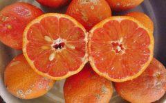 Os 13 Benefícios doLimão Cravo Para Saúde!
