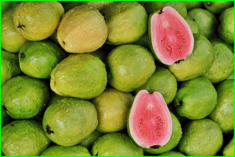 fruta goiaba